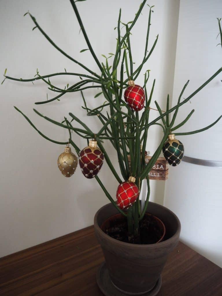 Mine fine nye julekugler på min kaktus
