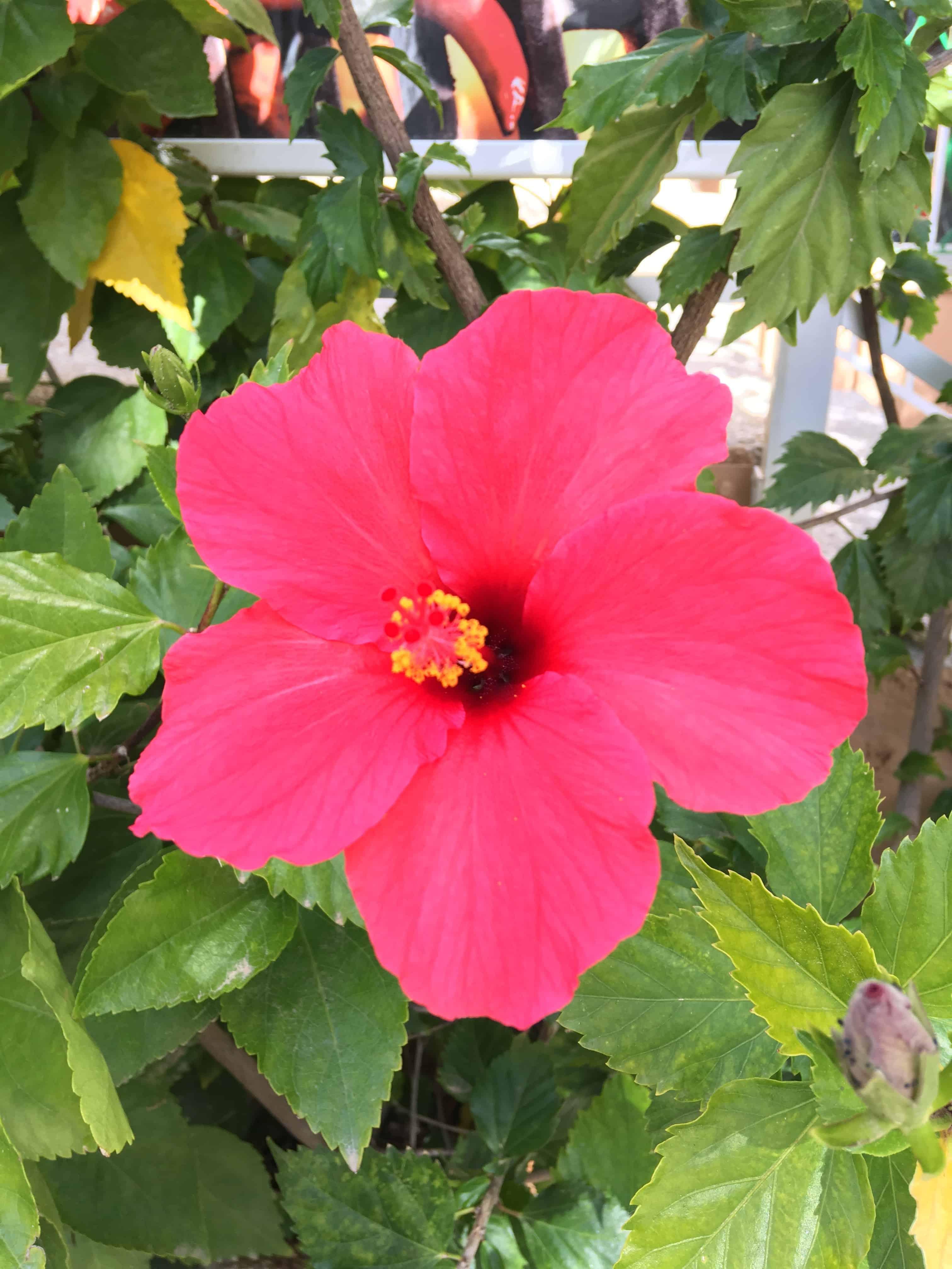 Smuk rød blomst