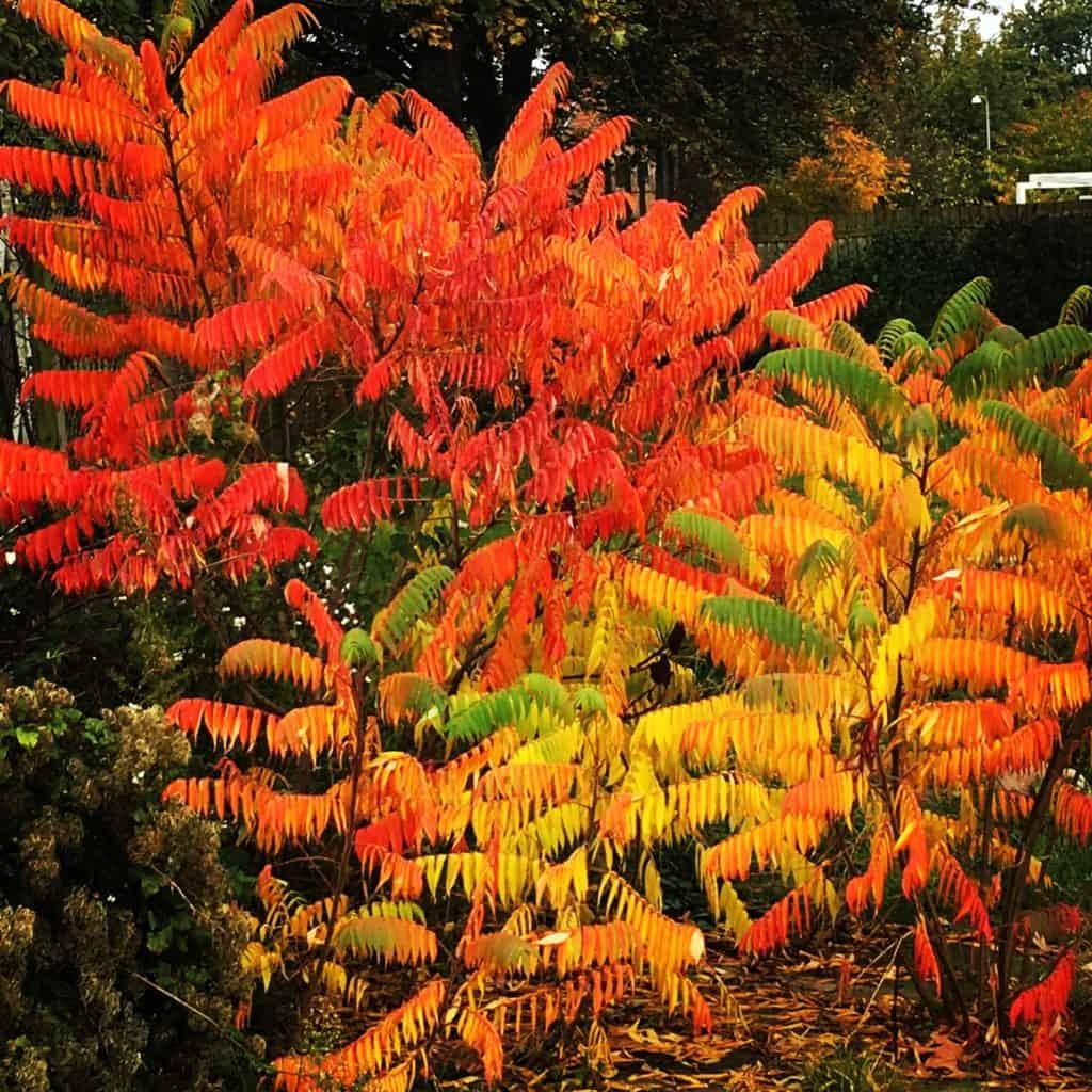 November bliver farverrig og festlig som billedet her