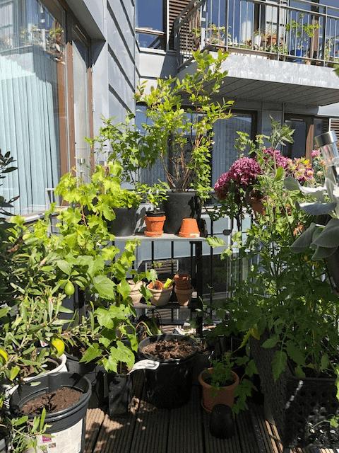 9 sjove facts om mig #3 - en del af vores planter på terrassen