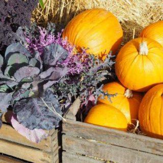 Græskar og pyntekål hører efteråret til