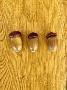 champignon af agern og små kastanjer