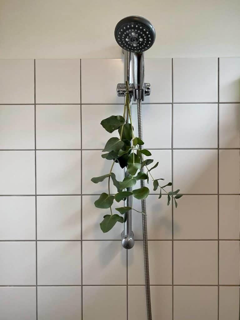 Nu dufter det af eucalyptus når vi går i bad