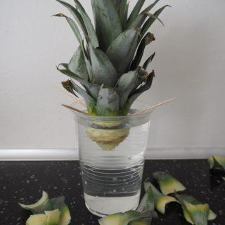 Ananas DIY