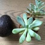 Avocado og planteplanet