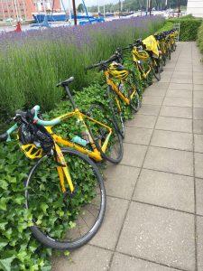 Cykler på rad og række