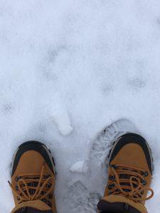 Dagens gå tur i sne