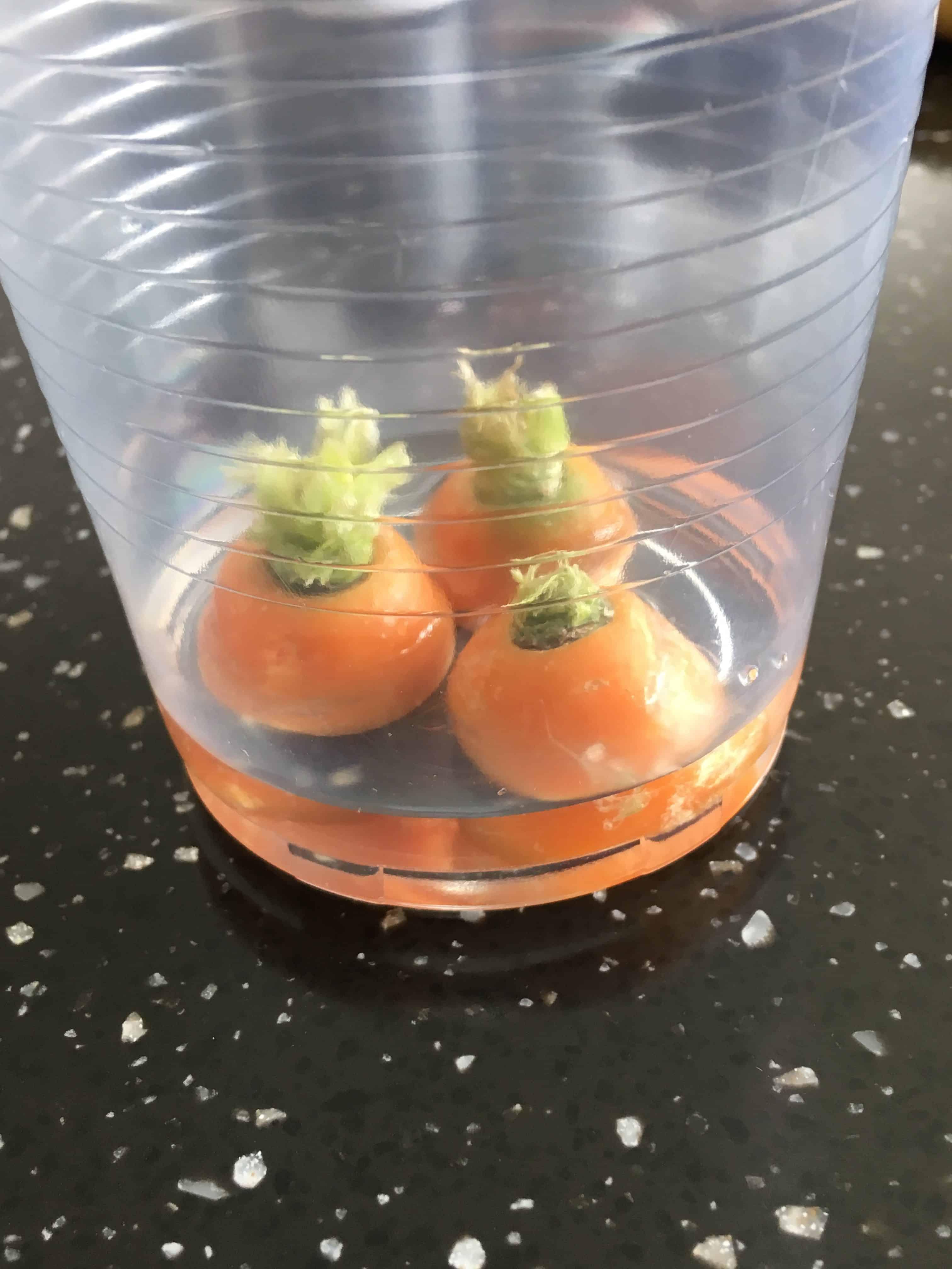 Gendyrkning af gulerodstoppe