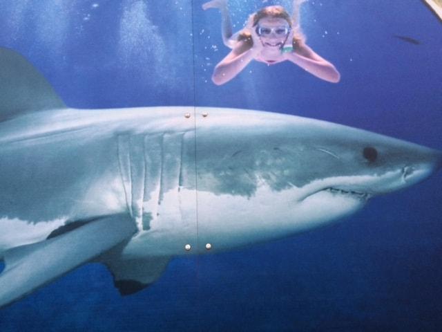 Haj med pige på Odense Zoo udstilling