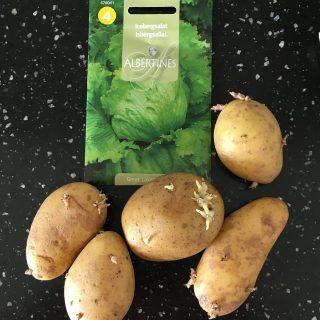 Kartofler og iceberg salat