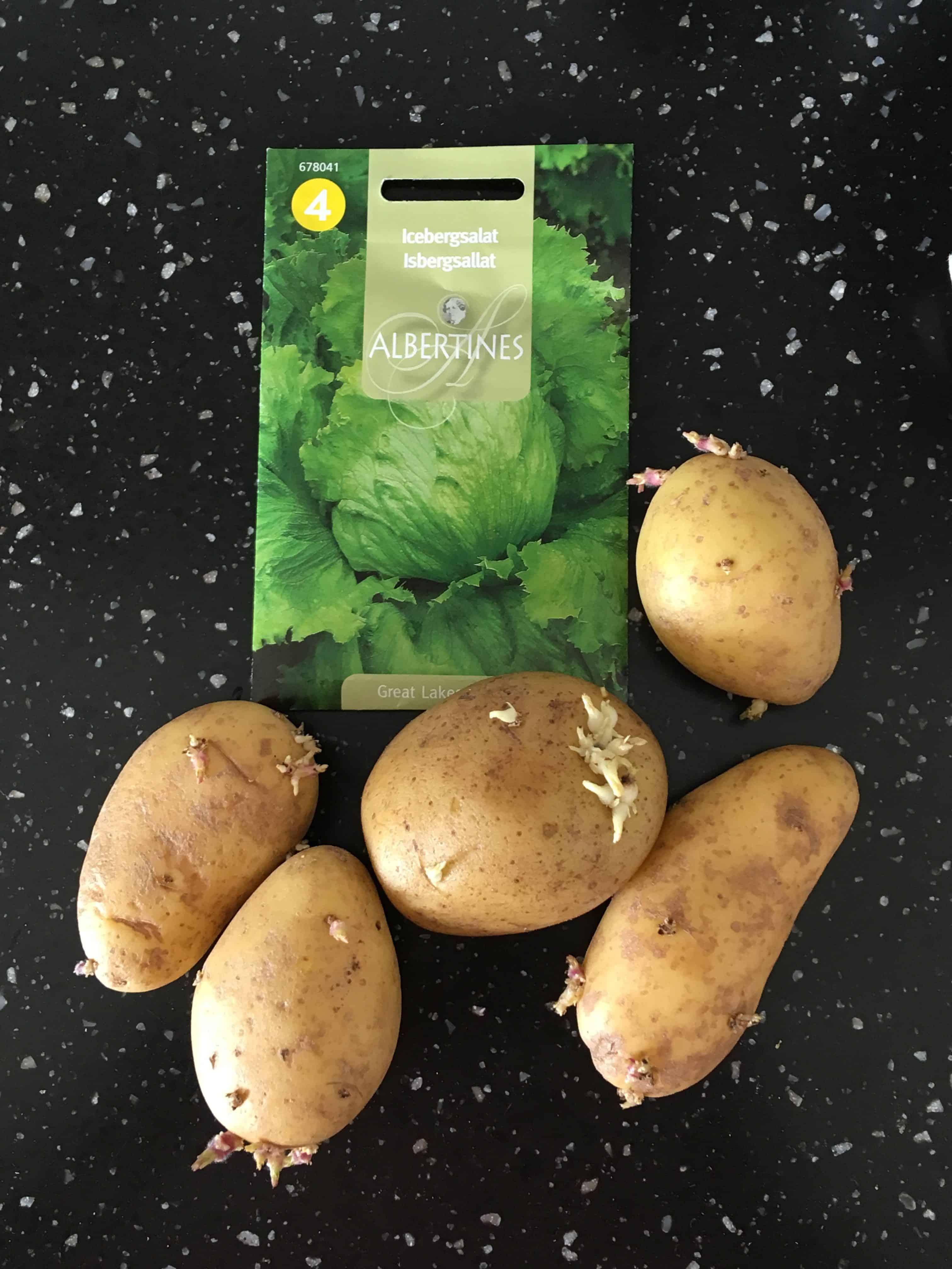Forspirrede kartofler og iceberg salat