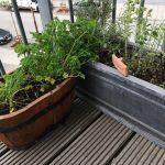 Krydderurter på vores lille terrasse - med luft