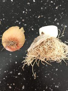 Løg og porre rødderne kom i jorden i stedet for i skraldespanden!