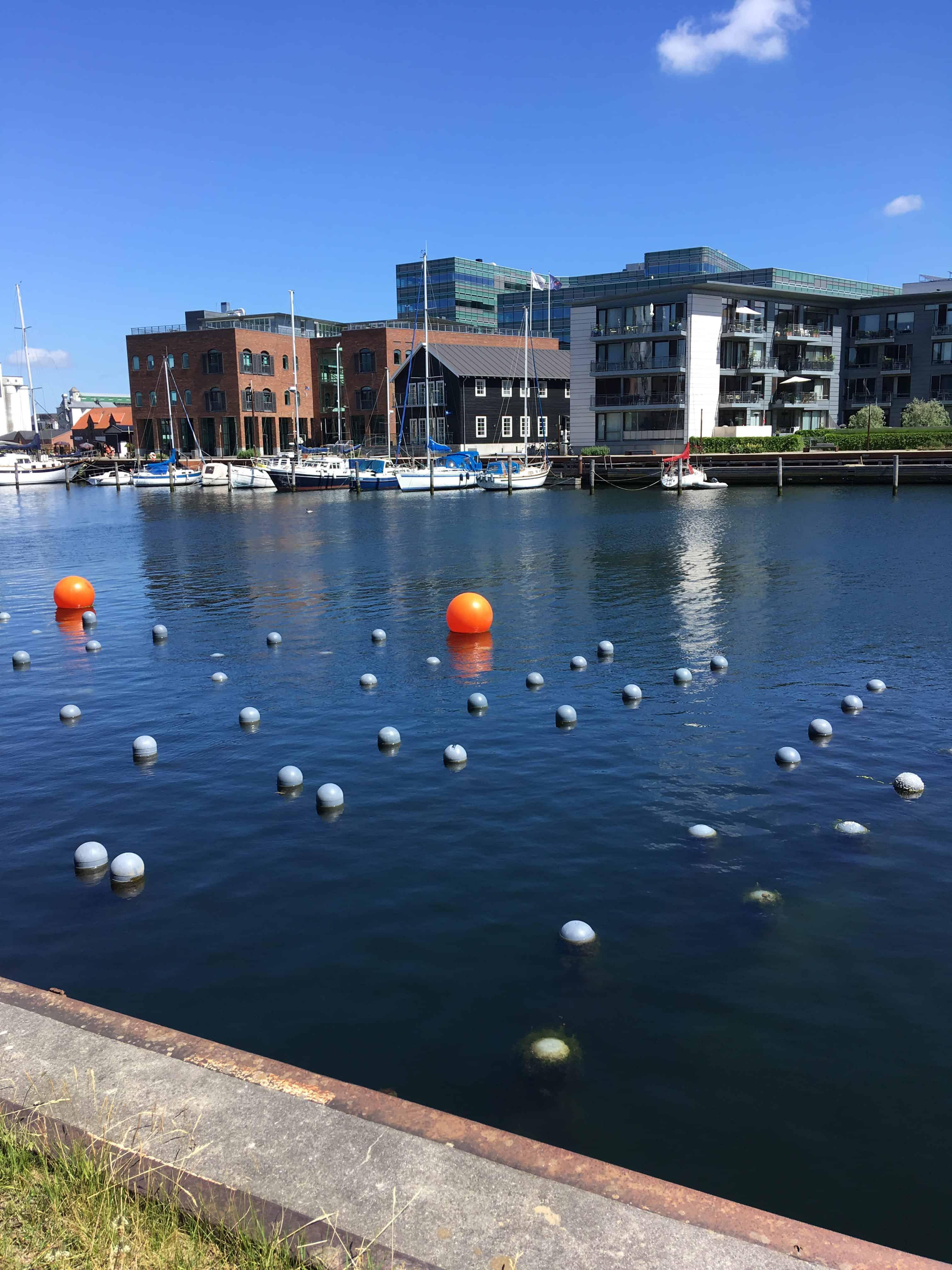 Muslinge rensnings projekt i havnebassinet