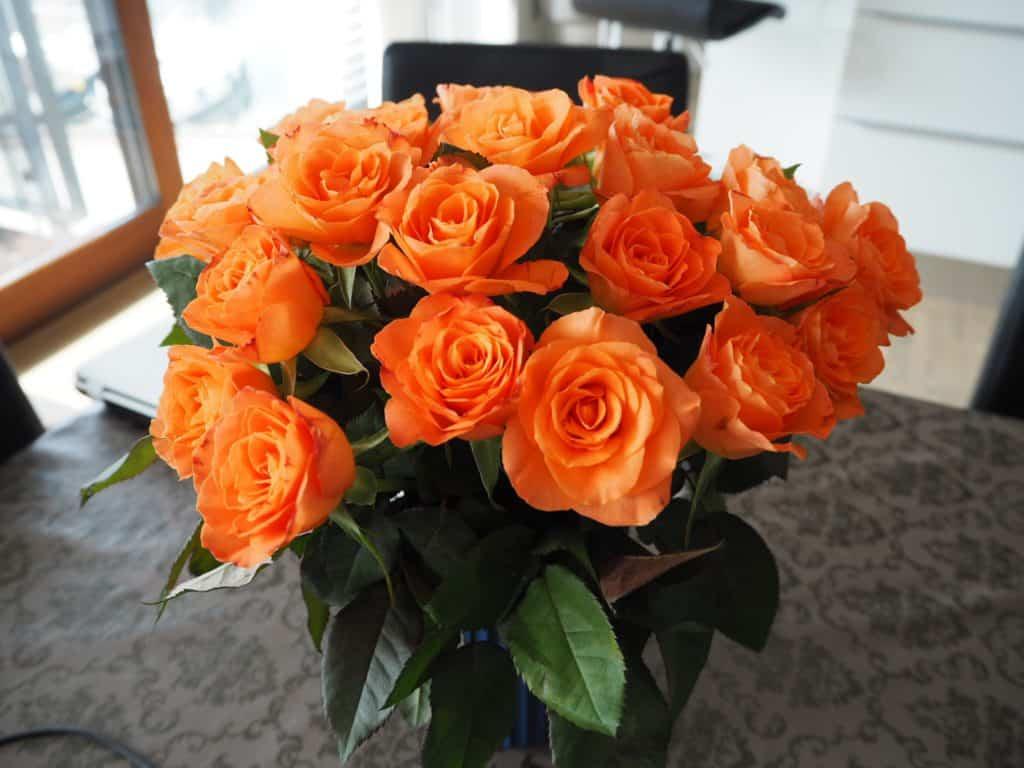 Mine orange roser