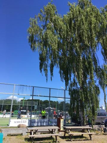 Padle sport og hængebirk på Byens Ø