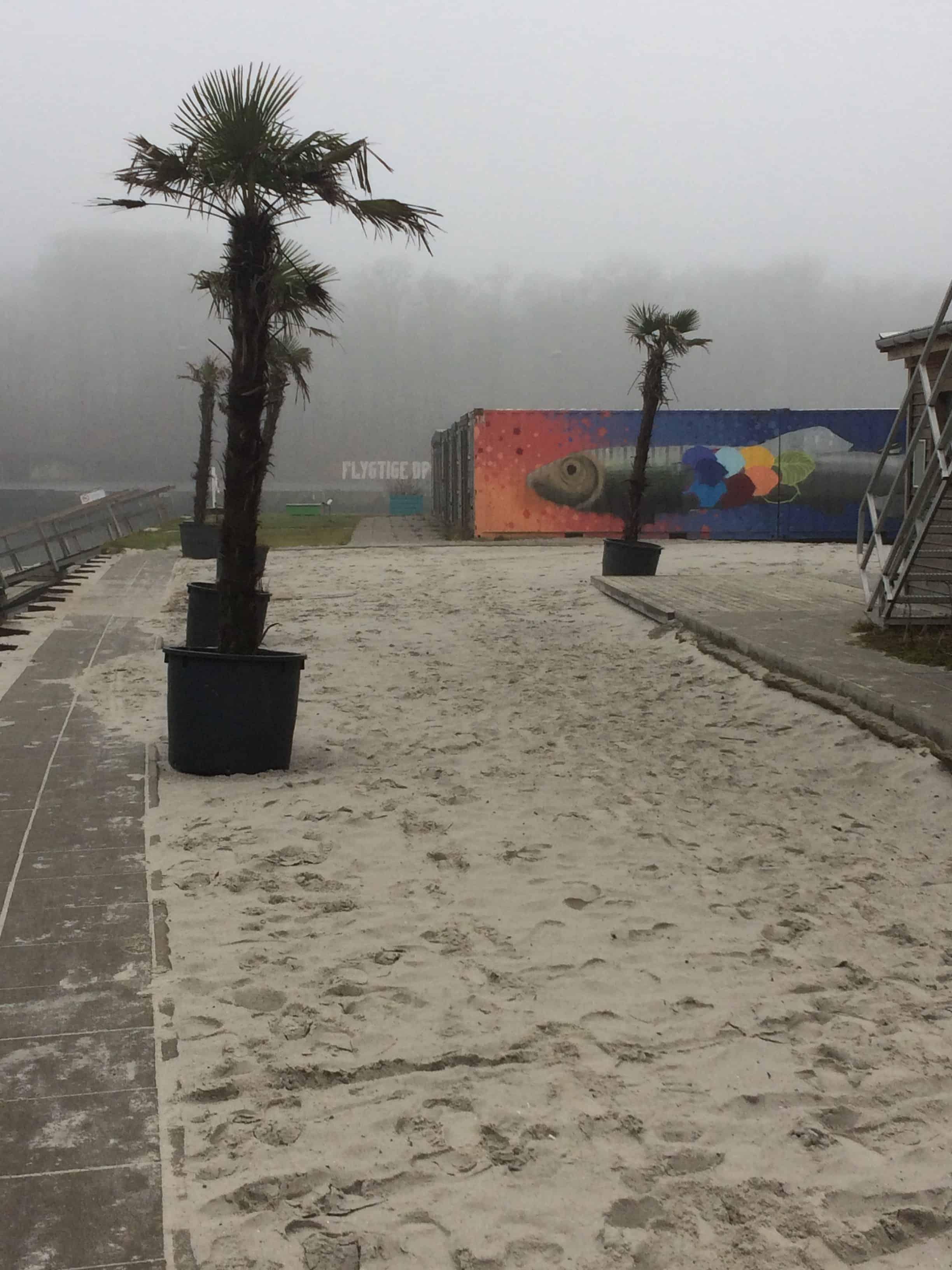 Palmer og tåge ved Fodboldfabrikken