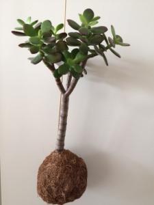 Planteplanet str. M