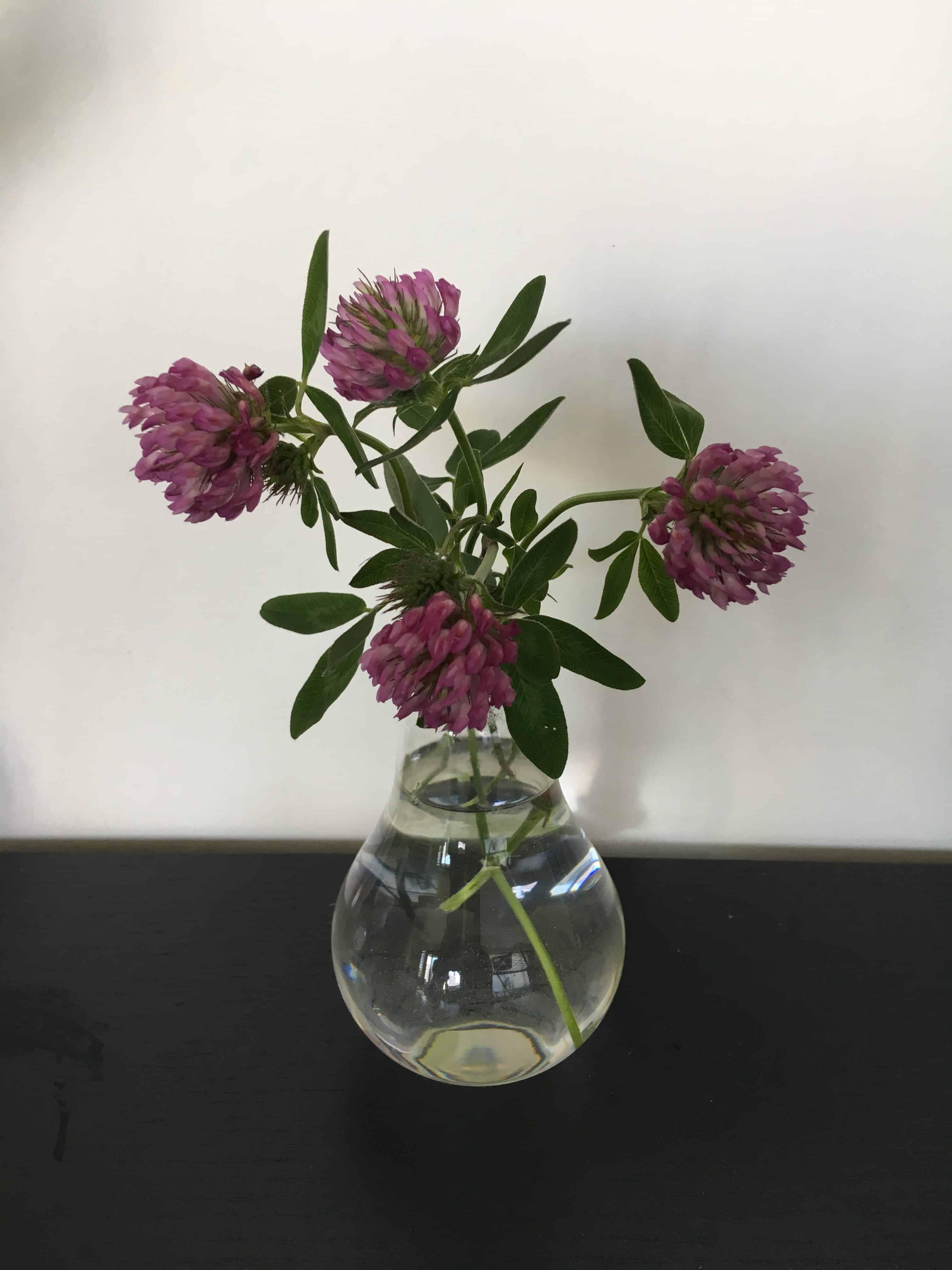 Rødkløver i pære vase