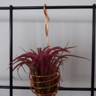Tillandisa holder i kobber alu wire hænge model