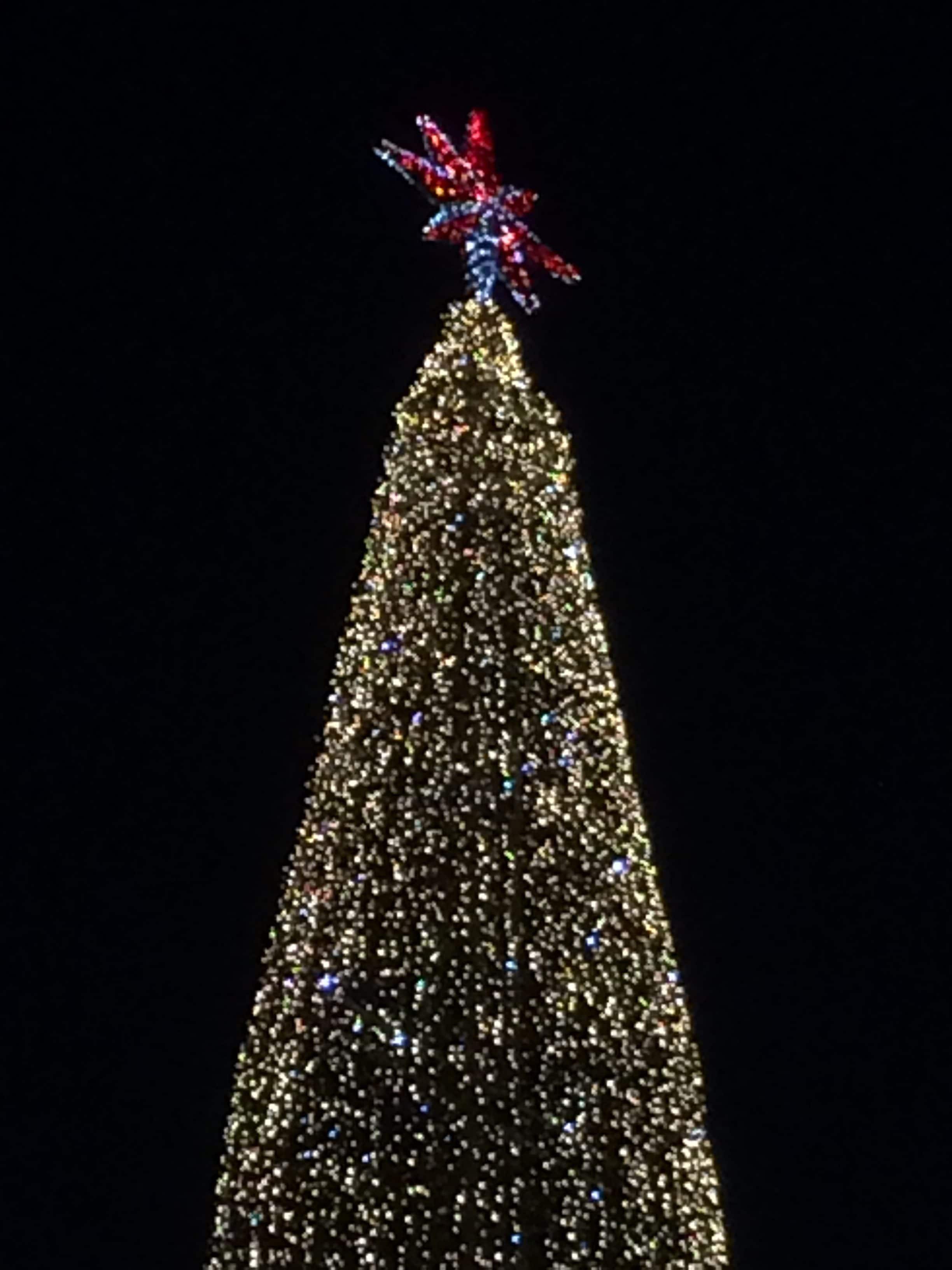 Rød stjerne i toppen af det store juletræ
