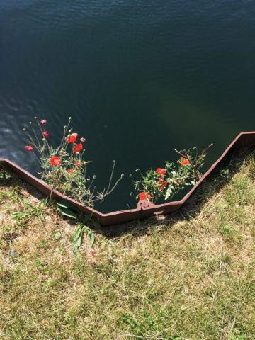 Valmuer på bassinkanten