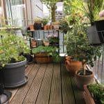 Mere planteliv på havnen